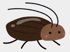 ゴキブリが発生している!何とかしてほしい!