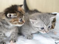 猫の多頭飼育崩壊の現場も増えています!