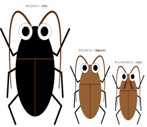 効果的なゴキブリ駆除のために②~直方市、中間市周辺でゴキブリ駆除をお探しなら【BIORESCUE虫の110番】