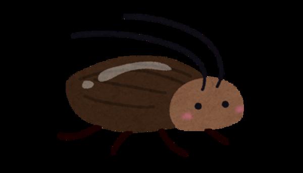 効果的なゴキブリ駆除のために①~北九州市でゴキブリ駆除業者をお探しならBIORESCUE虫の110番