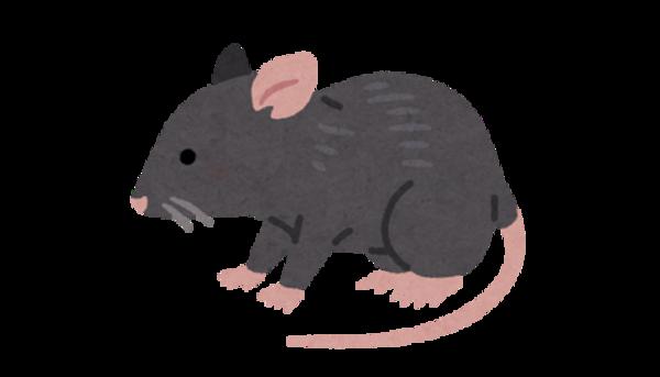かわいいからと言って油断禁物~福岡市でネズミの被害でお困りならBIORESCUE虫の110番
